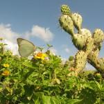 Příroda na Isla Margarita (autor: Danbri, Flickr)