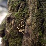 """Motýl z Petadoules """"v sedě"""""""